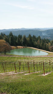 a beautiful vineyard setting for Meyer Family Cellars wine grapes